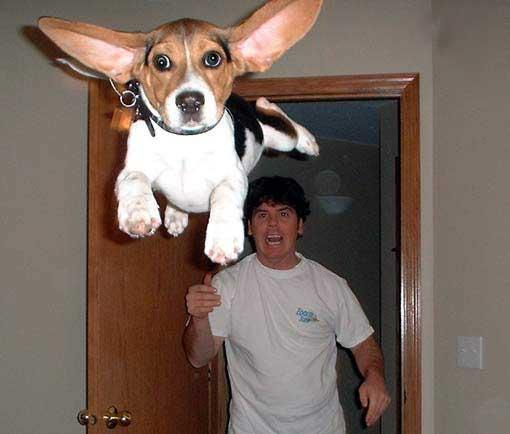 Flying Beagle